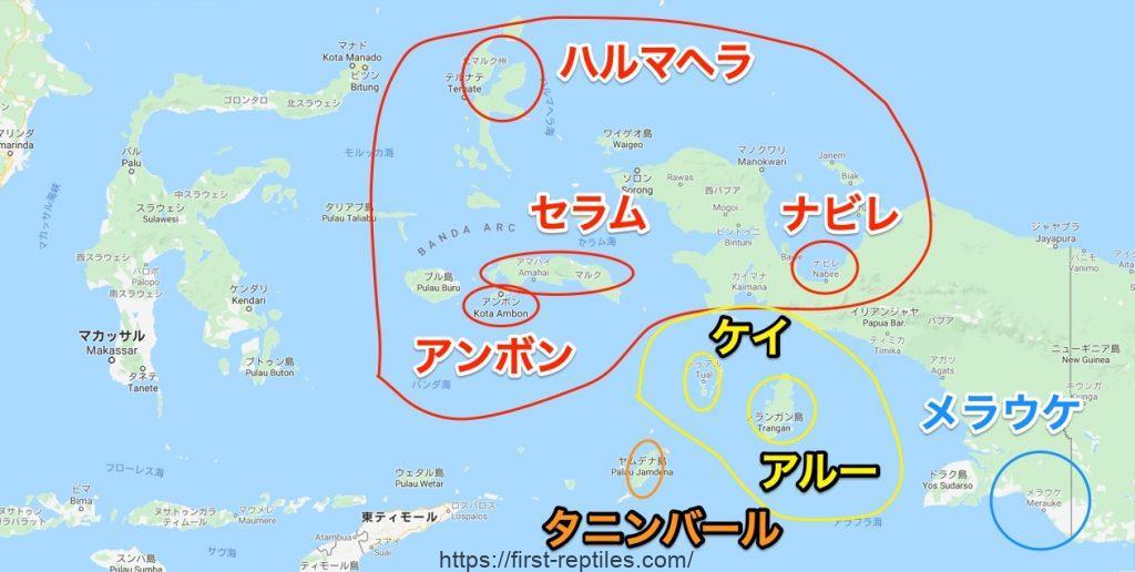 インドネシア系 アオジタトカゲ 生息地